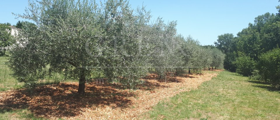 Land, 1910 m2, For Sale, Poreč - Baderna
